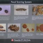 fecal-scoring