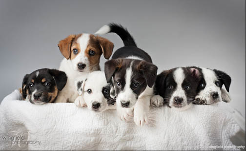 A prop can make a photo stand out. Terry Wingfield asks what is cuter than a basketful of puppies?