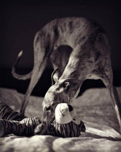 Petra Postma says let the puppy play while camera captures the action.