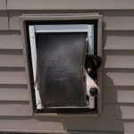 dogdoor2