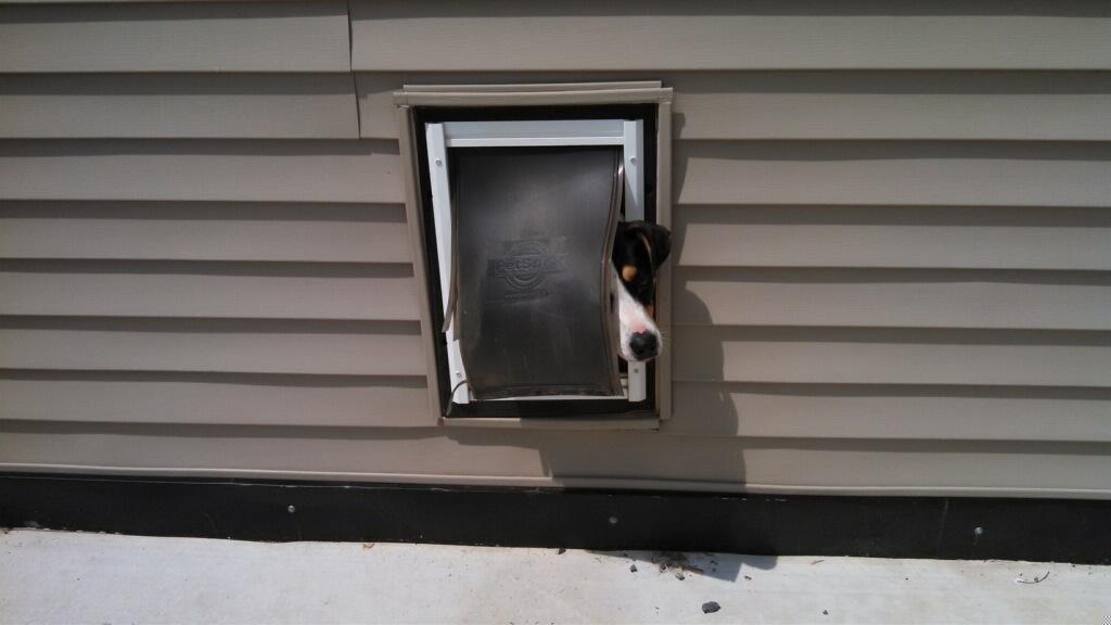 Doggie Doors 101