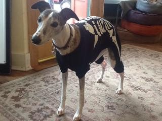 Halloween Means . . . Dogs in Costumes!