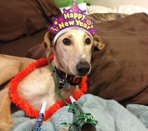 Top Ten Dog Lover's New Year's Resolutions