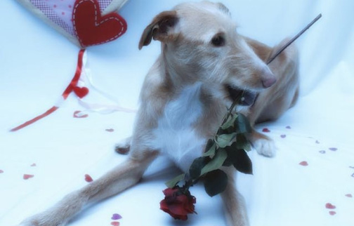 We Wish a Happy Valentine's Day . . .