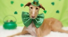 Happy St. Patrick's Day . . .