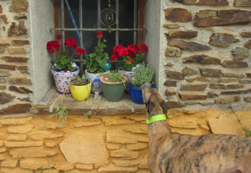 Wordless Wednesday — Stopping to Smell The Roses