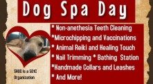 #SpaDay4SpayDays in Frederick, MD