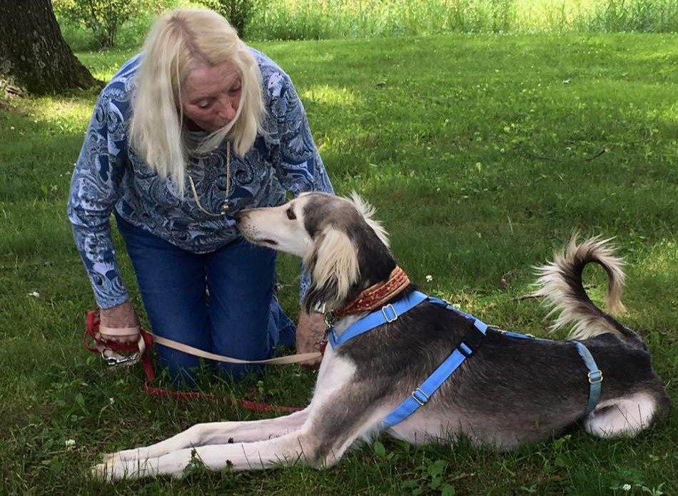 The Sighthound Underground | Changing the world       for one dog at