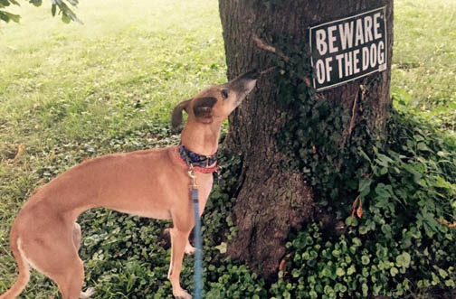 Wordless Wednesday — If Squirrels Could Post Signs